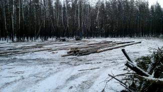 Мэрия Воронежа: лес в Отрожке вырубается законно