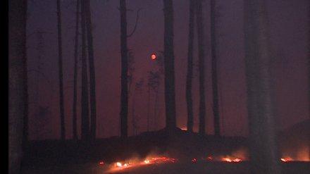 Минобороны отрицает поджог заповедника в Воронежской области
