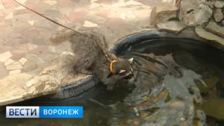 Из-за аномальной жары в Воронежском зоопарке в разы увеличилось потребление воды