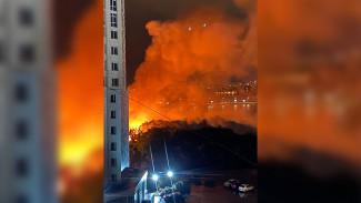 Воронежцы сняли на видео крупный пожар на берегу водохранилища