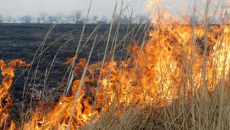 В Воронежской области значительно снизилось число ландшафтных пожаров