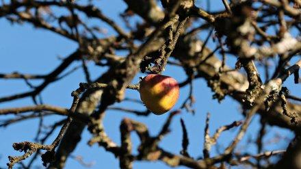 Стало известно, сколько воронежские застройщики были готовы выложить за яблоневые сады