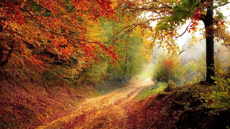 Наохрану лесов Воронежской области истратят неменее 900 млн. руб.