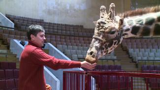 В Воронежском цирке покажут уникальный номер с поцелуем жирафа