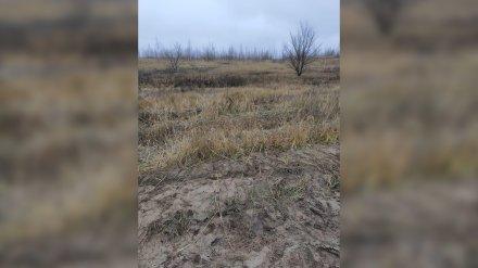 Пропавшего в воронежском микрорайоне таксиста нашли зарезанным в лесополосе