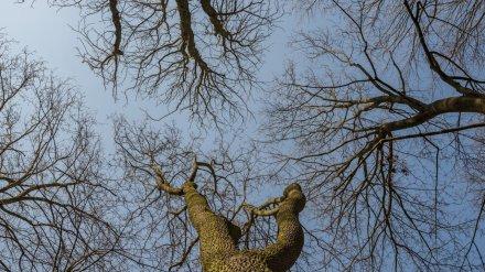 Воронежский сельчанин вырубил более полусотни деревьев на 900 тыс. рублей