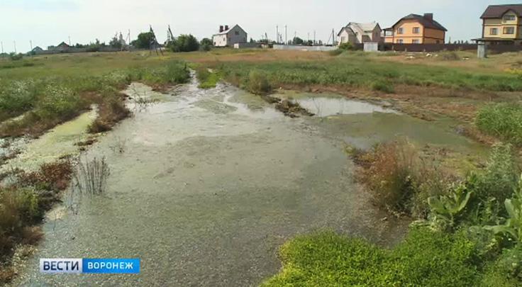 Воронежцы не могут добиться, чтобы убрали озеро из нечистот от их домов