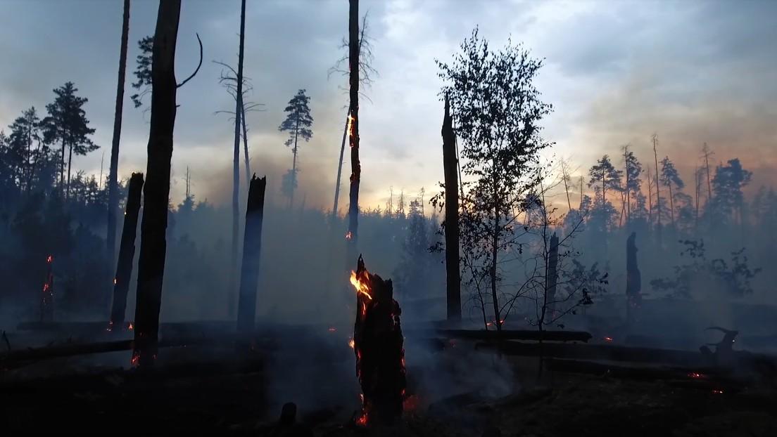 Последствия крупнейшего пожара в Воронежском заповеднике попали на видео