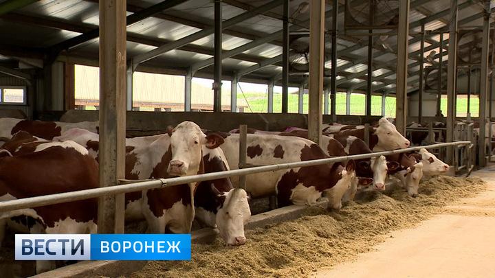 Воронежская область стала лидером по приросту объёмов товарного молока