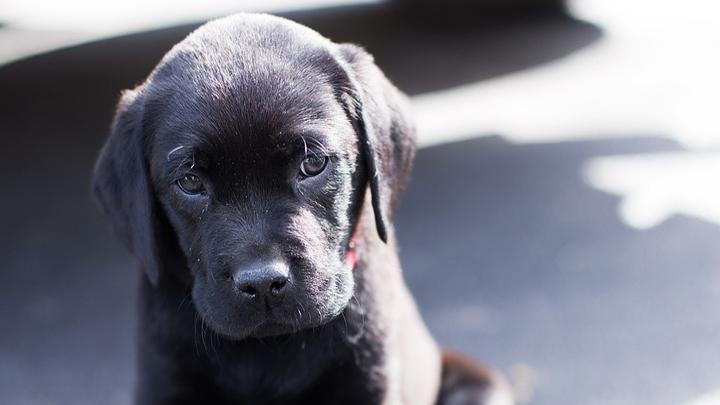 Под Воронежем устроивший расправу над щенками мужчина попал под следствие