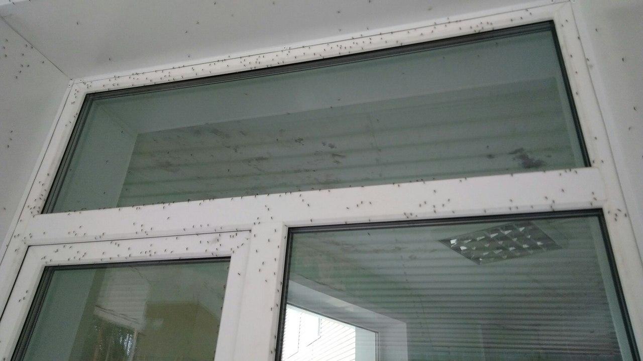 «Боимся выходить на улицу». Павловчане массово жалуются на нашествие комаров