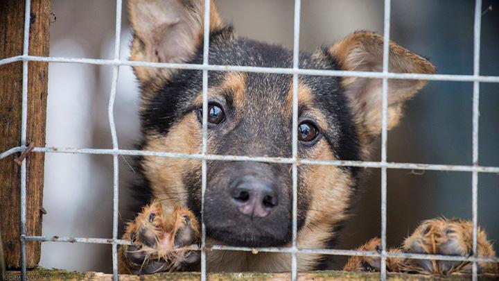 Власти отложили строительство собачьего приюта на Левом берегу Воронежа