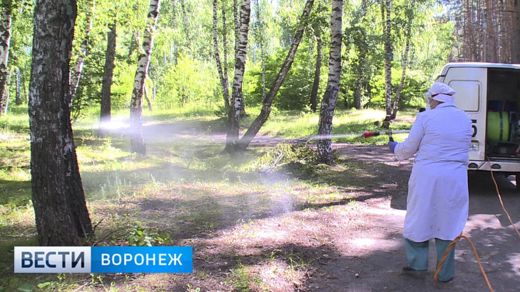 В Воронеже завершается обработка от клещей мест отдыха