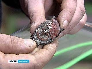 72 года спустя в Шилово нашли останки кавалера редчайшего ордена красного знамени