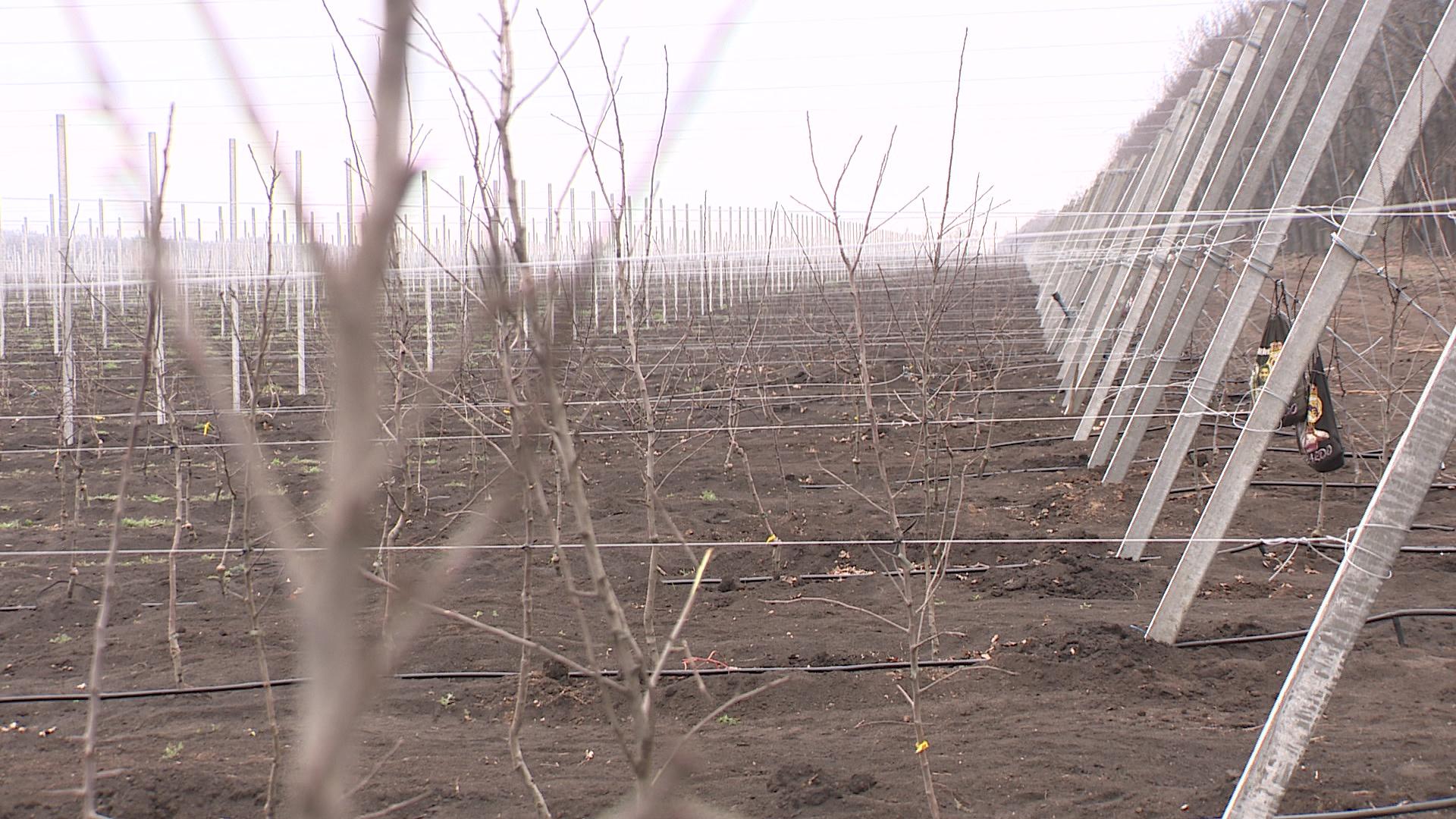 «Урожай может остаться в полях». Из-за пандемии воронежские фермеры лишились рабочих