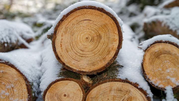 Житель Воронежской области заплатит 100 тыс. рублей за пять срубленных дубов