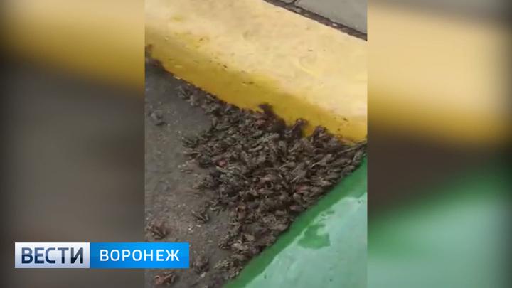 Эксперты объяснили нашествие жаб в микрорайоне Воронежа