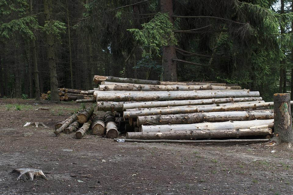 Жители села под Воронежем сообщили о незаконной вырубке деревьев под застройку
