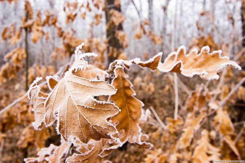 Лёгкий морозец и солнце ненадолго заглянут в Воронежскую область