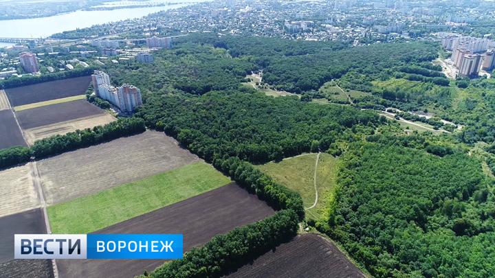 Специалисты создадут виртуальную карту Центрального парка Воронежа