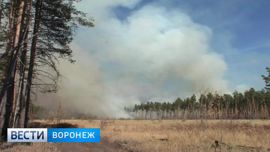 В Воронежской области из-за дождей снизился класс пожарной опасности