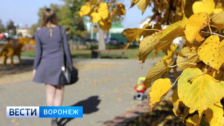 Синоптики рассказали, придёт ли в Воронежскую область «бабье лето»
