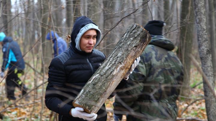 В окрестностях Воронежа очистят от сухостоя 3 тыс. гектаров леса