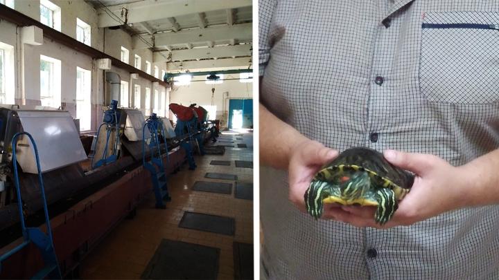 Воронежский Водоканал приютил ещё одну черепаху, оказавшуюся в канализации