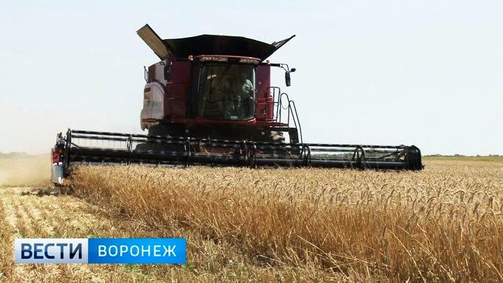 Воронежские аграрии собрали более 5 млн тонн зерна
