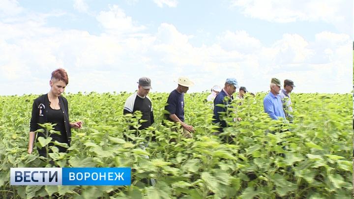 Поисковики заступились за отца погибшего под Воронежем Артёма Кузнецова