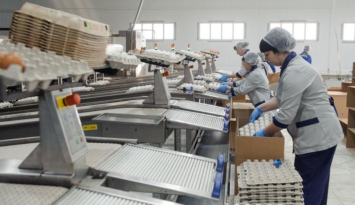Борисоглебскую птицефабрику включили в число наиболее значимых воронежских инвестпроектов