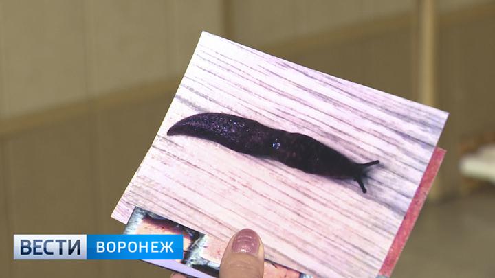 У жителей посёлка под Воронежем из крана с водой выливаются слизняки