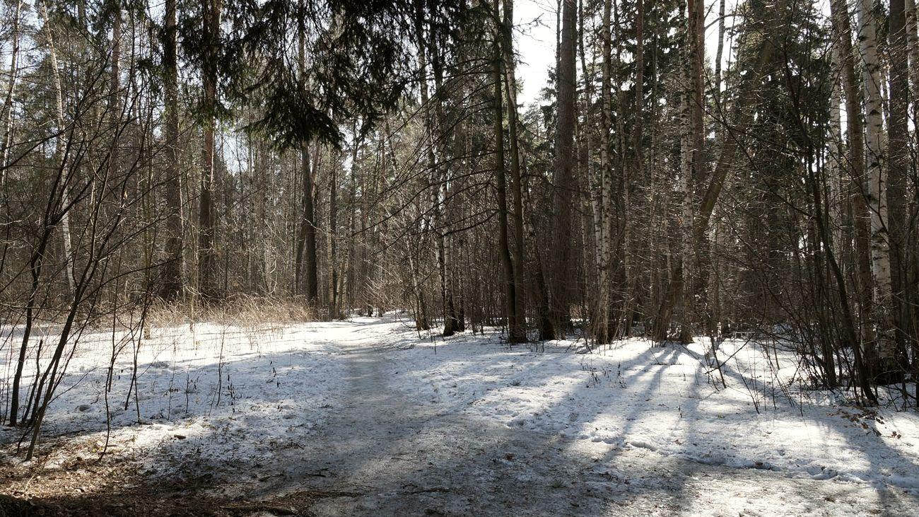 Пропавших в Воронеже двоих коллег нашли в лесополосе убитыми