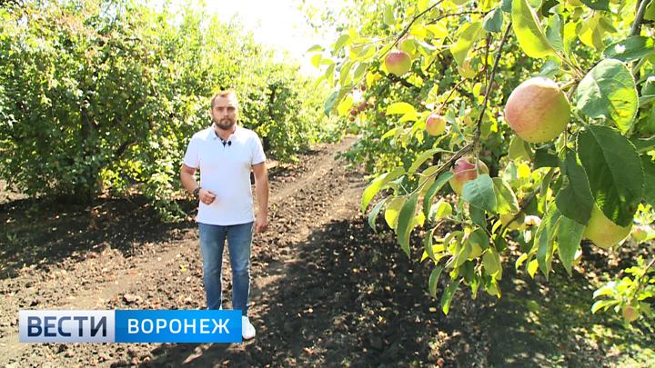 Прогноз погоды с Ильёй Савчуком на 18 – 19.08.18