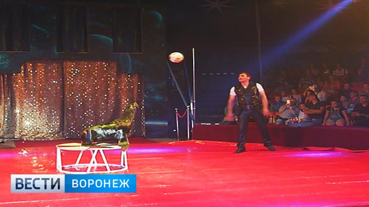 В Воронеже выступает морской котик, который бьёт по мячу лучше Дзюбы и Кокорина
