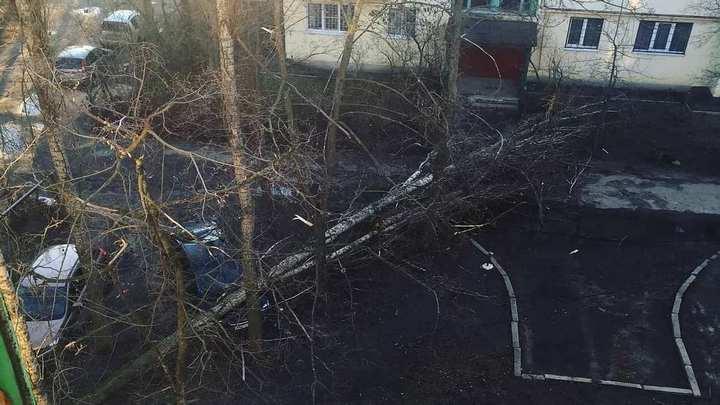 Воронежцы поделились фото последствий сильного ветра, повалившего деревья