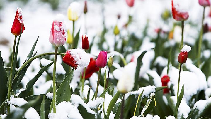 Синоптики: В Воронежской области на этой неделе ожидается похолодание, возможен снег