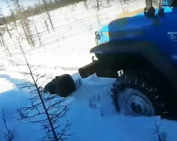 ВИДЕО: Воронежец требует наказать живодеров, заживо переехавших медведя в Якутии