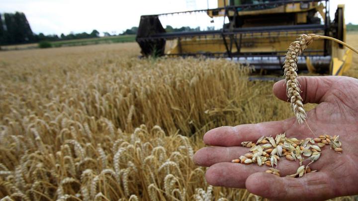 Аграрии 50 стран обсудят в Воронеже влияние изменений климата на урожаи и надои