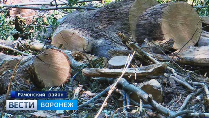 Воронежцы бьют тревогу из-за вырубки деревьев в Нагорной дубраве