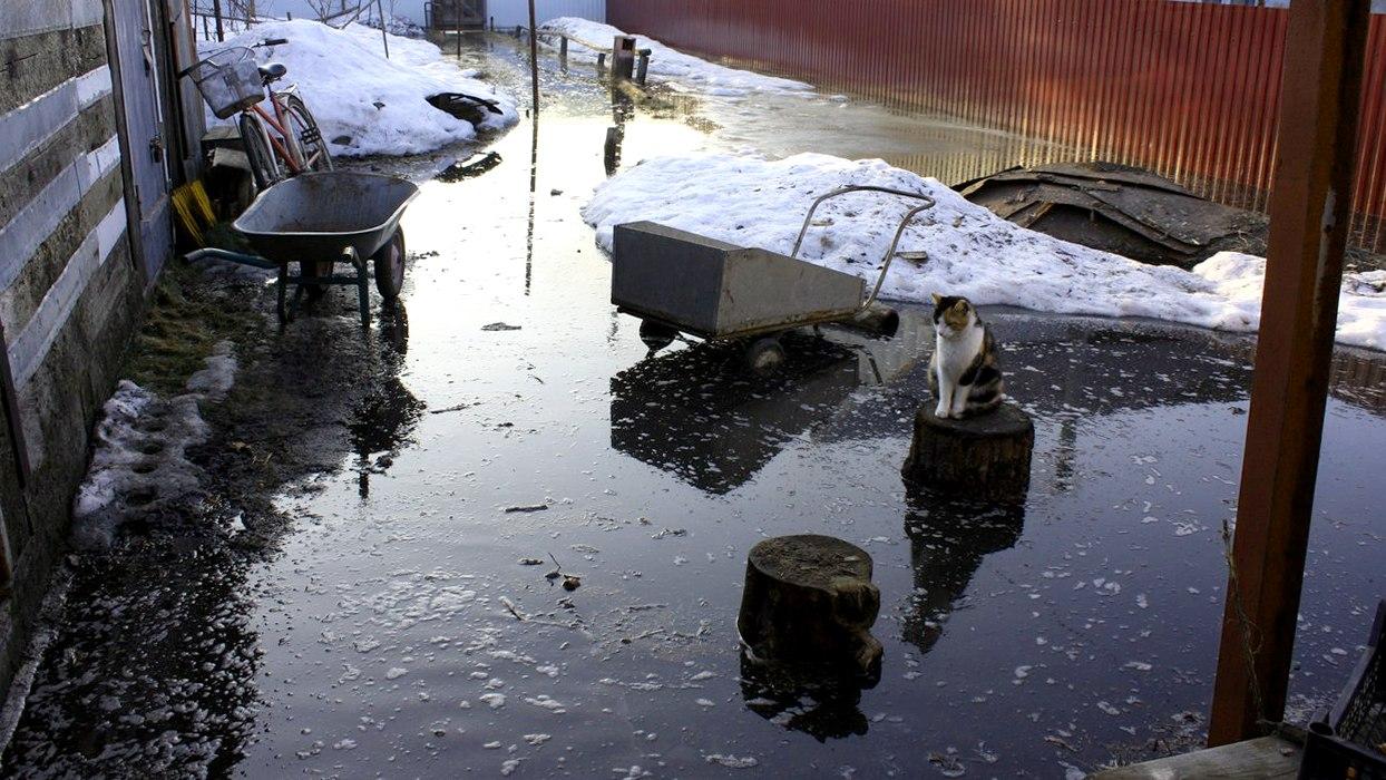 Жительница Воронежа: «После половодья содержимое выгребных ям плавает по микрорайону»