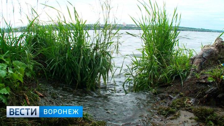 Из Воронежского водохранилища достали мужскую ногу