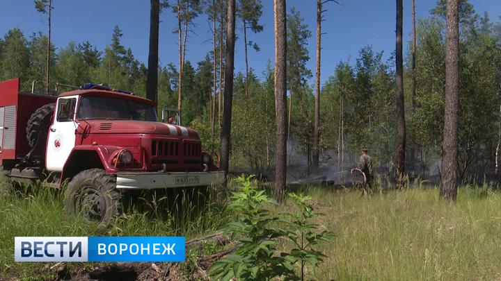 Под Воронежем рядом с жилыми домами горит 1,5 гектара лесной подстилки