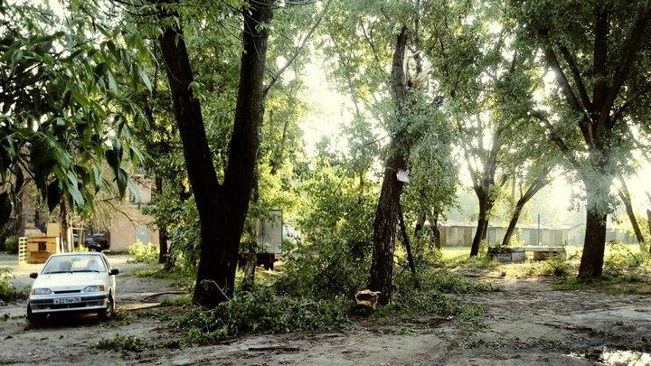 В центре Воронежа дерево во время урагана рухнуло на пенсионерку