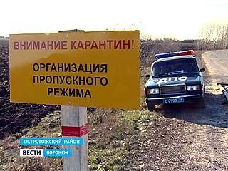 Африканская чума свиней обнаружена в Воронежской области