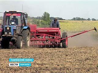 Аграрии на юге Воронежской области приступили к севу озимых