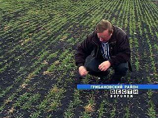 Аграрии области получили субсидии из федерального и областного бюджетов