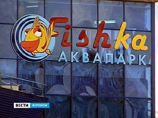 """Аквапарк """"Фишка"""" на Отсужева только открылся, но уже может закрыться"""