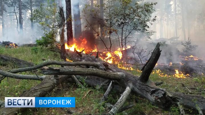 Почему в Воронежском заповеднике два дня полыхал пожар
