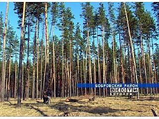 Бобровские леса на грани вымирания